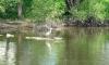 P0119 Fischreiher