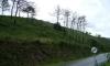 P1112 Waldbrandflaechen bei Cee
