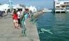 P0720 Santander, Kunst am Sporthafen