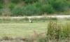 P0927 ein Storch